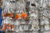 Goldfish Market, Hong Kong — Stok fotoğraf