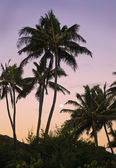 Full moon at daybreak through the palm trees — Foto de Stock