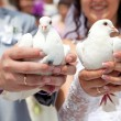 Wedding pigeons in hands of the groom and the bride — Stock fotografie