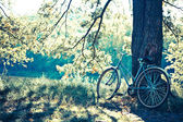 Biking in the forest under the sun. — Stock Photo