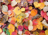 Colorful autumn leaves on the ground — 图库照片