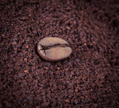 Coffee bean is the layer of ground coffee — Stock Photo