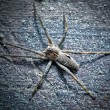 Stock Photo: Big spider on wooden surface
