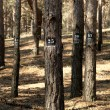 Trees marked for cutting down — Stock Photo