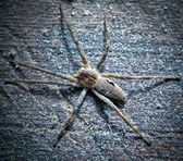 Big spider on a wooden surface — Stock Photo