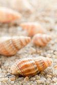 Havet cockleshell på stranden sand — Stockfoto