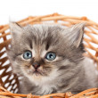 Small kitten in a wattled basket. It is isolated on a white back — Foto Stock