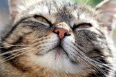 The happy cat looks directly — Stock Photo
