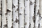 Wall from birch logs — Stock Photo