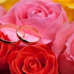 Gold wedding rings on flower . Decorating the wedding ceremony. — Stock Photo #33744181