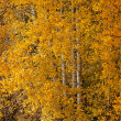 Trees in the wood with autumn foliage. — Stock Photo