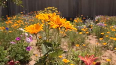 Flowers in the garden filmed in motion — Vidéo