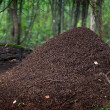 Stock Photo: Big anthill in woods.