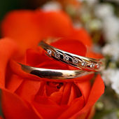 Gold wedding rings on flower . Decorating the wedding ceremony. — Stock fotografie