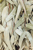 Dried leaves of eucalyptus broom for a bath — Stock Photo