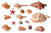 Set of seashells isolated on white background — 图库照片