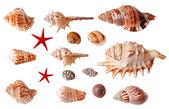 Set of seashells isolated on white background — Stock Photo