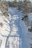 Droga w lesie śnieg. — Zdjęcie stockowe