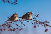 Karmienie ptaków — Zdjęcie stockowe