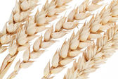Ear of wheat isolated on white background — Stock Photo