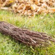 Stock Photo: Fall clearing - brush and pile of leaves
