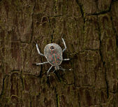 Beetle on tree — Stock Photo