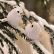 Snow birds in winter forest — Stock Photo