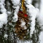 Golden pine on the snow pine three — Stock Photo