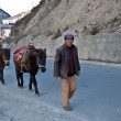 Horses in chinese village - Lizenzfreies Foto