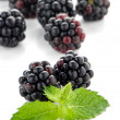 Fresh berry blackberry — Stock Photo #12436659