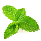 Fresh mint close up — Stock Photo