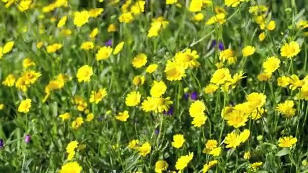 Картинки природа и цветы 360 640
