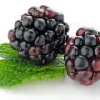 Ripe fresh blackberry — Stock Photo