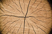 Crack wood spiral — Stock Photo