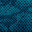 Blue python snake skin - Stock Photo