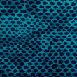 Blue python snake skin — Stock Photo