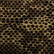 Royalty-Free Stock Photo: Snake skin background