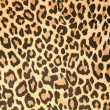 Leopard leather pattern texture closeup — Stock Photo