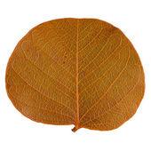 осенний лист — Стоковое фото