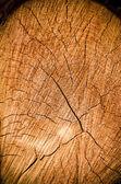 Crack wood spiral — Stock Photo
