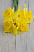 Flores de narciso — Foto Stock