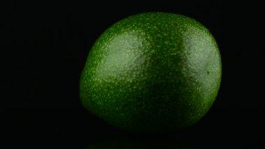 Avocado on black — Stock Video