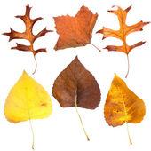 Sześć spadek liści — Zdjęcie stockowe