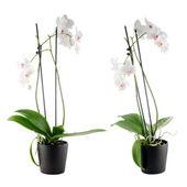 Piękna biała orchidea w wazonie — Zdjęcie stockowe