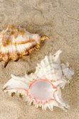 Muscheln und muscheln — Stockfoto