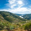 Stock Photo: Vineyars in Douro Valley