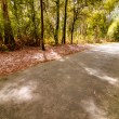 Stock Photo: Road in autumn wood