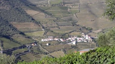 Terraced vineyards in Douro Valley — Stock Video