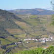 Terraced vineyards in Douro Valley — Wideo stockowe