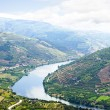 Vineyars in Douro Valley — Stock Photo
